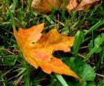 October Lawn & Garden To-Do List
