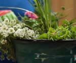 How to Plant a Thriller, Filler, Spiller – Today's Homeowner