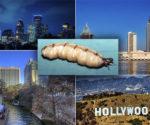 Termites in North America