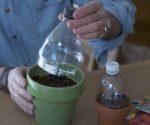 Make this Mini Greenhouse to Jump-Start Planting Season