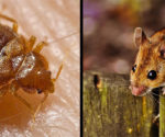 Having a Mouse and Bed Bug Infestation Can Hurt Your Love Life, Survey Says