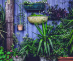 Ideas for Growing a Garden in a Small Space – Today's Homeowner