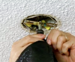 How to Protect Light Fixtures When Painting a Ceiling