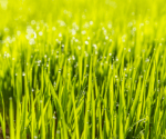 6 Steps to Getting the Perfect Lawn