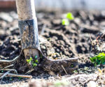 5 Spring Cleaning Tips for Your Garden