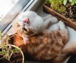 Cat perching in the window