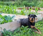 Dog playing in plants